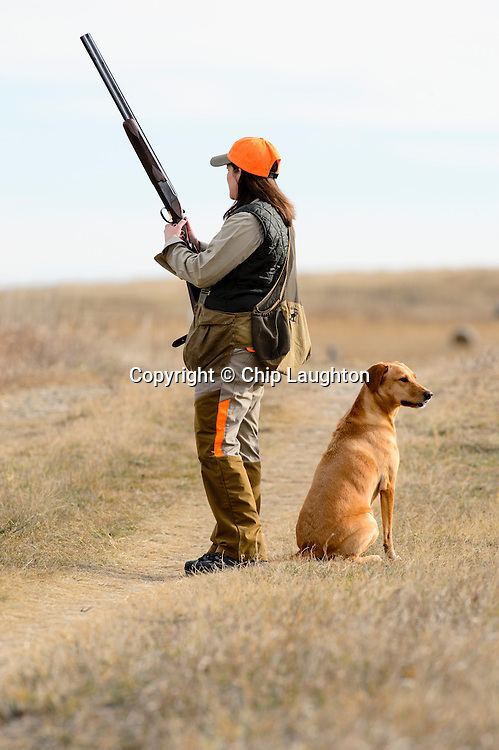 pheasant hunting stock photo image
