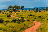 Looking down a dirt road in Murchison Falls National Park, Uganda.