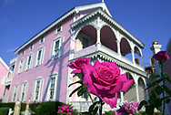 A pink rose is on display in front of a pink building that houses a dress shop, Sunday, August 11, 2002, in Cape May, New Jersey. (Photo by William Thomas Cain/photodx.com)