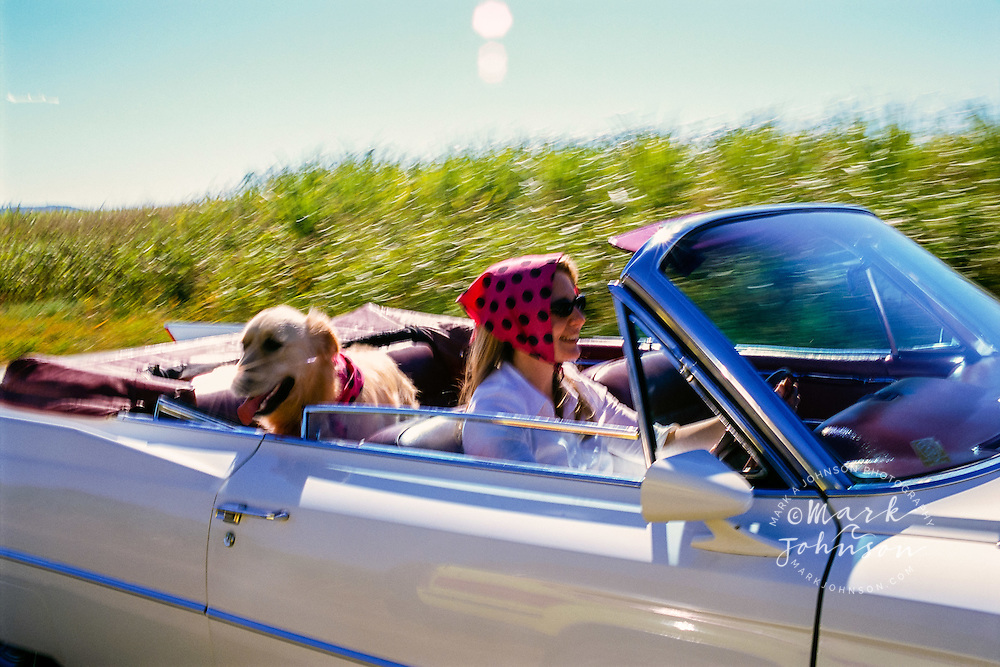 Australia --- Woman Driving with Dog in Convertible