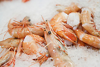Close-up of shrimps in ice