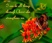 All Things Through Christ Butterfly bible verse image for sale.