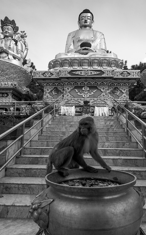 A monkey drinks from a caldron at the Swayambhunath Stupa in Kathmandu, Nepal.