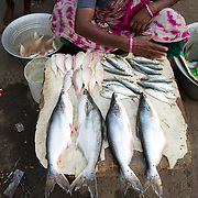 A woman swats flies away from the fish she is selling in front of her home. She is another example of business owner helped by Janodayam.