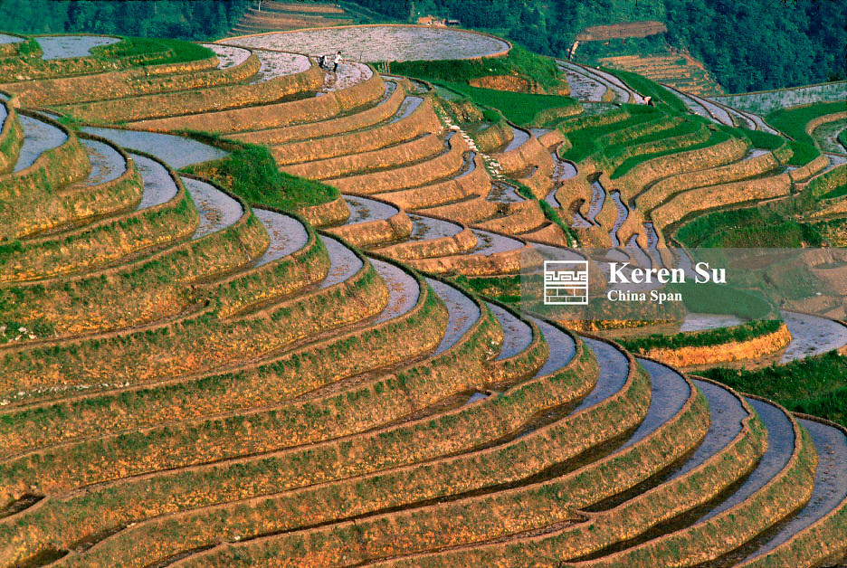Landscape of terraced rice paddy in the mountain, Longsheng, Guangxi Province, China