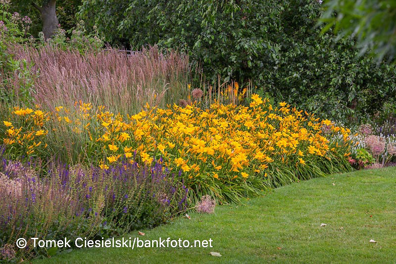 Summer  blue and yellow flowerbed