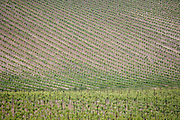 vineyard in France the Languedoc France