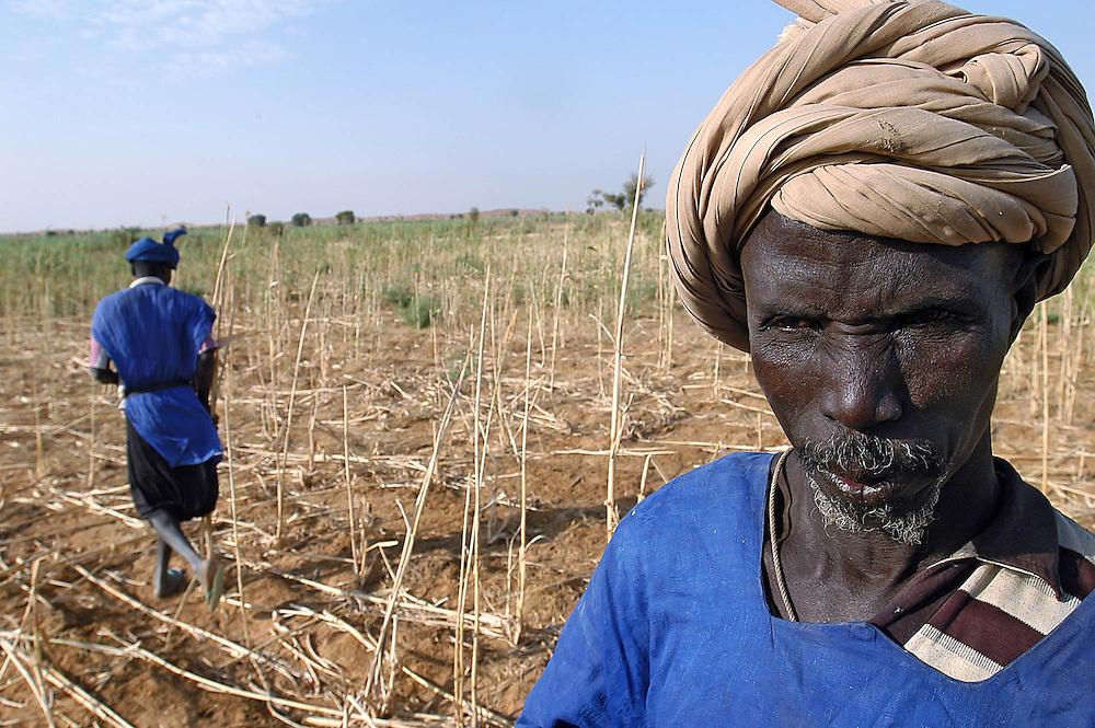 Un paysan dans son champ d&eacute;vast&eacute; par les criquets lors de l'invasion de 2004, dans le Guidimakha, l'une des r&eacute;gions les plus touch&eacute;es.<br /> La Mauritanie a perdu environ 30&nbsp;% de ses r&eacute;coltes, ouvrant une p&eacute;riode de crise alimentaire.
