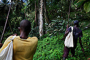 Two workers in charge of gathering the cocoa harvest, are walking next to a big shade tree in the plantation of Claudio Corallo, on the island of Principe, in Sao Tome and Principe, (STP) a former Portuguese colony in the Gulf of Guinea, West Africa.