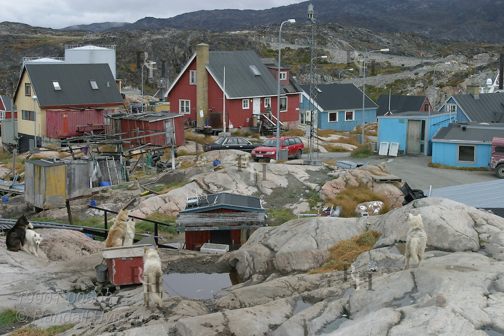 Sleds dogs chained on rock outcrop in late summer overlook colorfully painted homes and buildings of Ilulissat, third largest town in Greenland.