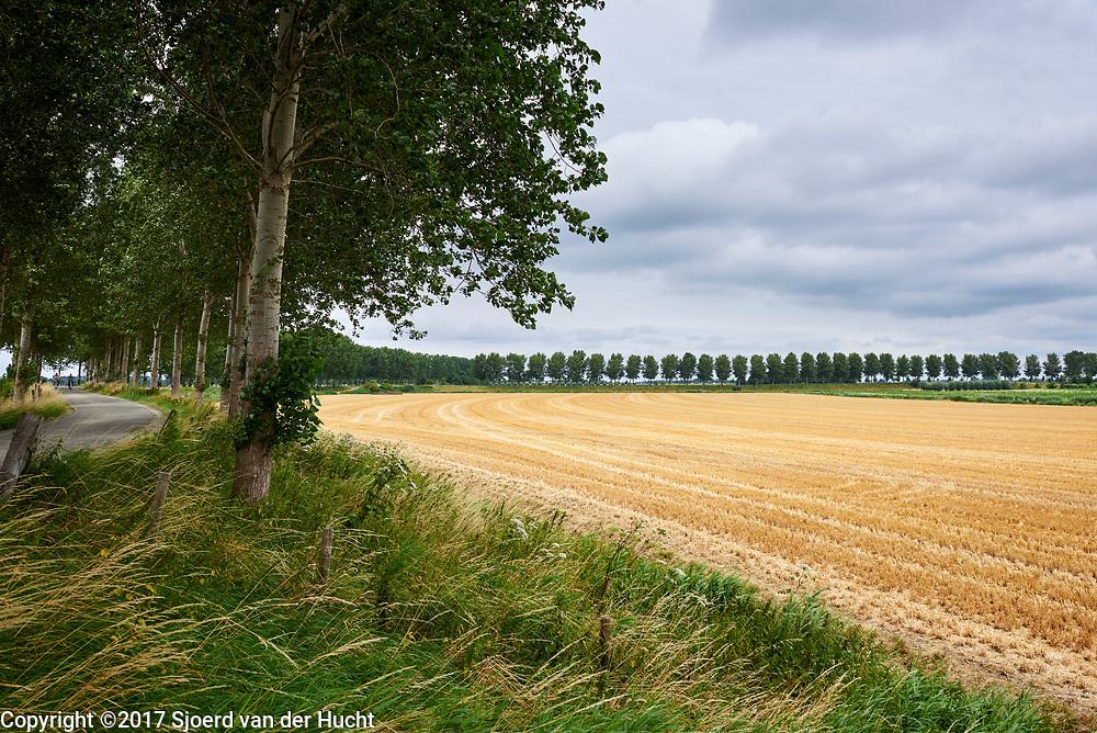 Weide landschap in Brabant - Meadow land in The Netherlands