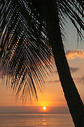 Sunset and palm tree, Esperanza, Viecques, Puerto Rico