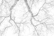 Oak Branches, Ahwahnee, California 2018