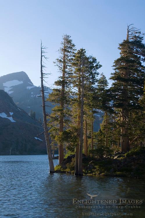 Pine trees on the shore of alpine Suzie Lake, Desolation Wilderness, El Dorado National Forest, California