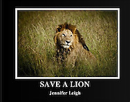 Save a Lion - A children's book about saving the Lions. All proceeds go towards National Geographic Big Cat Initiative.