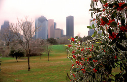 Stock photo of frozen trees with berries near downtown Houston with the skyline in the background