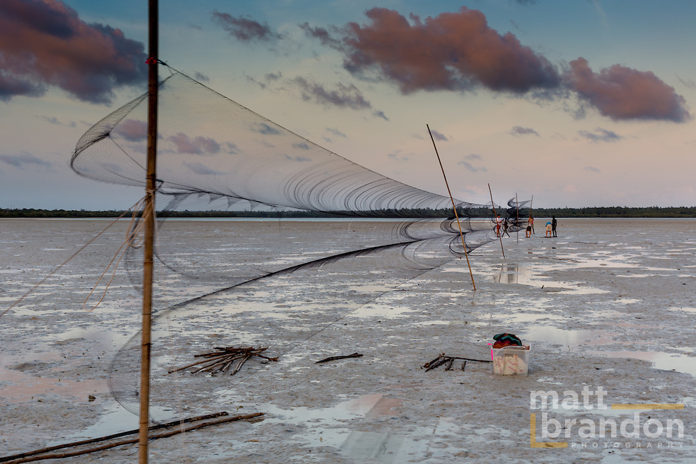 A Rocha net's are set up on the Mida Creek, Kenya to capture and ring shore birds.
