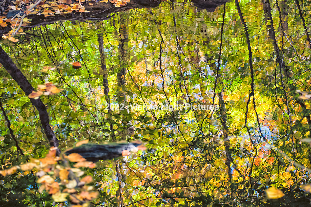 Reflections on an Autumn Pond