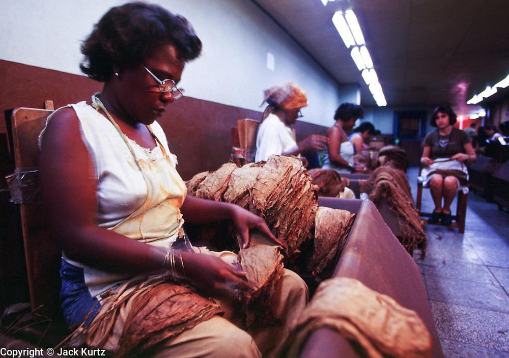 HAVANA, CUBA: Women workers grade tobacco leaves at the Partagas Cigar Factory in Havana, Cuba. Wealthy people prize Cuban cigars as the symbol of a fine smoke and revolutionaries favor them because of the cigar?s traditional tie to Fidel Castro.  Photo by Jack Kurtz