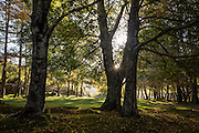 The sun rises through the branches of one of the trees at Covão da Ametade, in an autumn morning