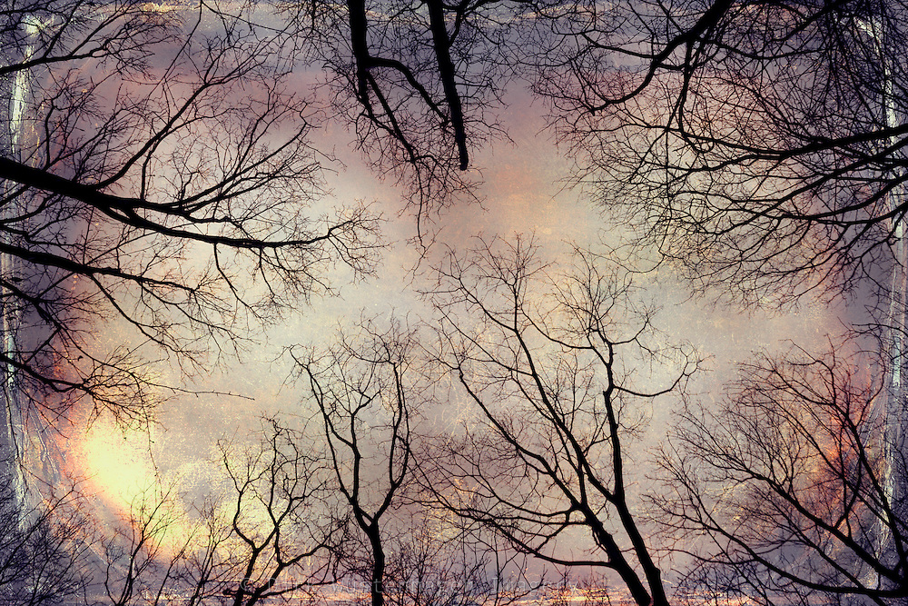 tree silhouettes against a cloudy sky in winter