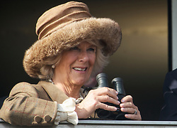 HRH Camilla Duchess of Cornwall watching the 1st race with her son Tom Parker Bowles at the Cheltenham Festival Ladies Day. Cheltenham Racecourse, Cheltenham, United Kingdom. Wednesday, 12th March 2014. Picture by i-Images