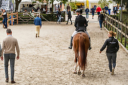 Moller Eva, GER, So Unique<br /> Ermelo - Weltmeisterschaft Junge Dressurpferde 2019<br /> Finale für 4 jährige Dressurpferde<br /> Final for 4 years dressage horses<br /> 03. August 2019<br /> © www.sportfotos-lafrentz.de/Dirk Caremans