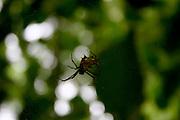 Santo Andre_BA, Brasil...Detalhe de aranha em Santo Andre, Bahia...A spider in Santo Andre, Bahia...Foto: LEO DRUMOND / NITRO