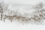 """Josh Dirksen rides one last line through birch trees in a Niseko, Japan backcountry zone as a storm closes in. The line is known as """"T.T. Gully"""" after Gentemstick guru Taro Tamai."""