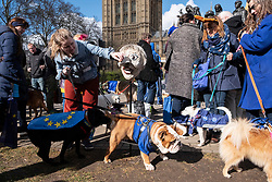 © Licensed to London News Pictures. 10/03/2019. London, UK. A dog unirates on a photograph of Brexiteer Jacob Rees-Mogg MP during the Brexit Is A Dog's Dinner! protest in Westminster. Dog owners and their dogs demonstated with a clear message for politicians to ensure a no-Brexit deal is avoided. Photo credit: Ray Tang/LNP
