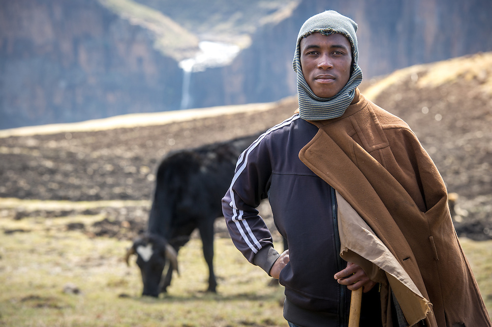 Portrait of a local shepherd and cattle standing on a plateau across from Maletsunyane Falls in Somenkong, Lesotho, Africa