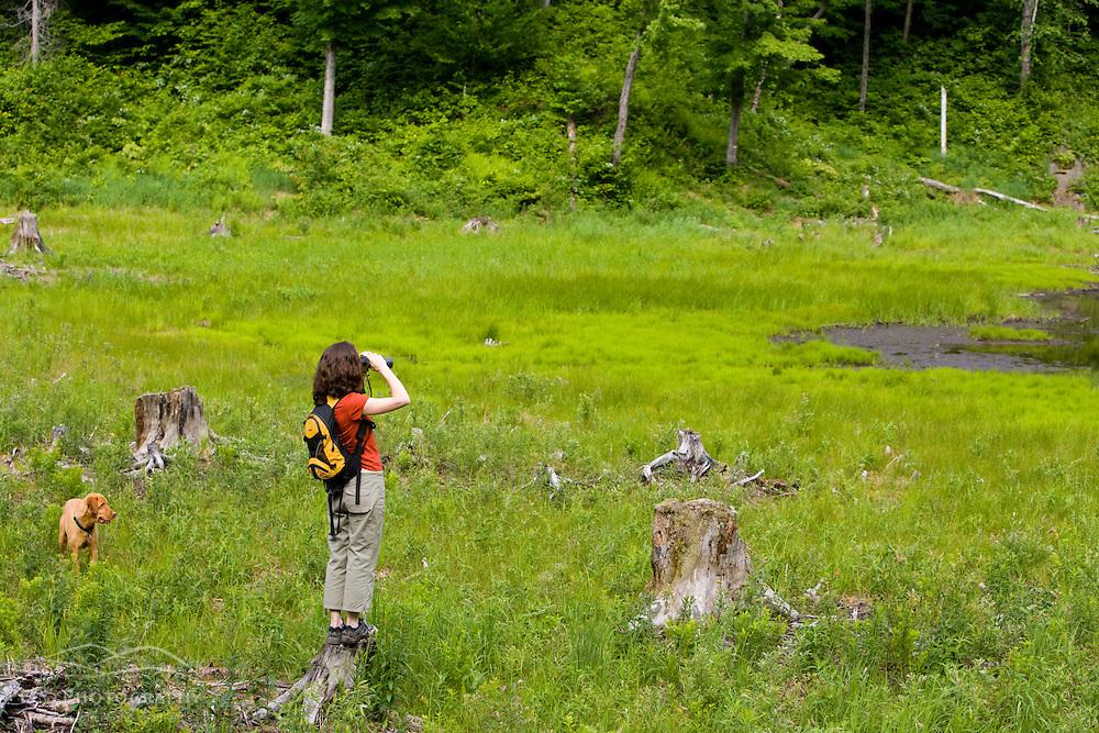 Birdwatching in the Green Mountains. Eden, Vermont.