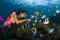 Diving in Guam's Piti Marine Park unit.