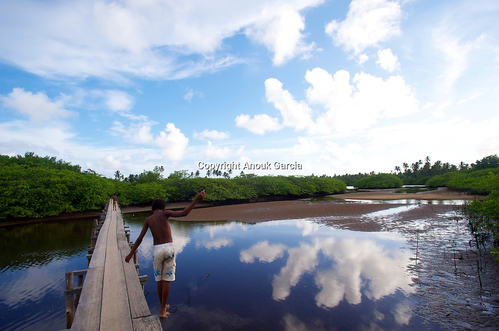 Sur le RioTatuamunha, les lamantins refont désormais parti du paysage///On RioTatuamunha, the manatees remake from now on left the landscape.