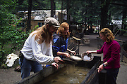Gold panning, Skagway, Alaska, (editorial use only, no model release)<br />