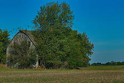 a barn that time has forgotten appears to be mostly still intact but it may be due to the trees and brush that surround it holding it up.