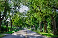 Street Canopy of Trees in Quogue, NY, NY