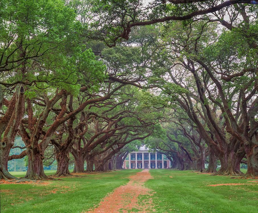 Live Oaks line path leading to southern plantation, twisty branches, white columns, Vacherie, LA