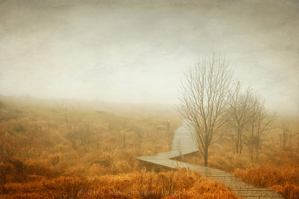 Boardwalk through the High Fens/ Belgium on a rainy and misty November day.