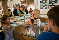 """Kayla shows off her one week old piglet """"Mr. Pearl"""" to Corrina Beaulieu during Belmont's 4H Fair on Saturday.  (Karen Bobotas/for the Laconia Daily Sun)"""