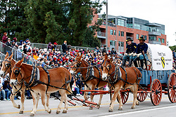 Horse drawn wagon of the United States Army, 1st Cavalry, from Fort Hood, Texas, 2017 Tournament of Roses Parade, Rose Parade, Pasadena, California, United States of America