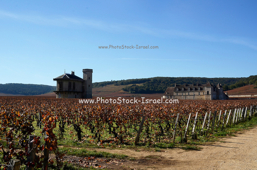 Autumn Vineyard Photographed in France in October