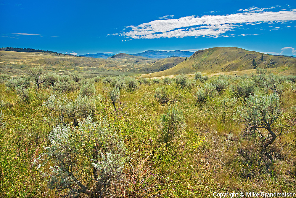 SAgebrush and Grasslands. Thompson Valley, Kamloops, British Columbia, Canada