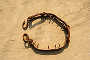 12th February 2015, Mathura, India. A banned ankle chain used by elephant handlers in India to tether and inflict pain on elephants, on show at the Elephant Care and Conservation Centre, run by Wildlife SOS, Mathura, India on the 12th February 2015.<br />