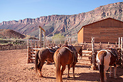 Horses in a corral wait for a trail  ride; Red Cliffs Lodge, near Moab, Utah, USA.