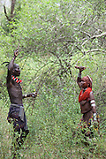 Africa, Ethiopia, Omo River Valley Hamer Tribe Tribal dancing