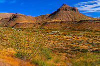 Ocotillos, Homer Wilson Ranch in background, Chihuahuan Desert, Ross Maxwell Scenic Drive in Big Bend National Park, Texas USA.