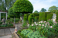 Rosa, Lauris nobilis and stone statues of women in the Rose Garden at the Laskett Gardens, Much Birch, Herefordshire, UK