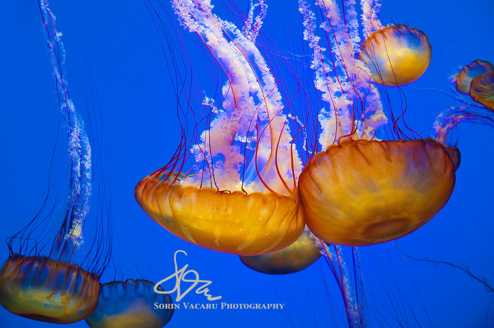 Visiting the Monterey Bay Aquarium