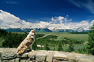 Australian Shepherd, Teton Range, Grand Teton National Park, Snake River, Wyoming<br /> PROPERTY RELEASED